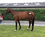 Don Poli's 1/2 sister after making €105000 at Tatts Ireland Derby Sale 2015