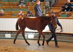 New Approach x Gee Kel filly foal who realised £400000 at Tattersalls December sale in 2013
